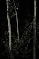 Dark Forest by aponom