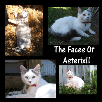 The Face Of Asterix by EvilHaraz