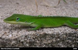 Lizard on a Rocky Surface 03 by phantompanther