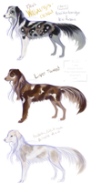 Pied Tweed and Brindle (Kooiker x Mini Aussie) by PaintedCricket