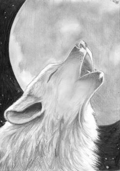 Wolf And Moon by renatagamaro
