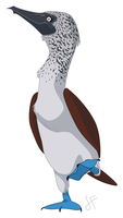 Blue-Footed Booby by shayfifearts