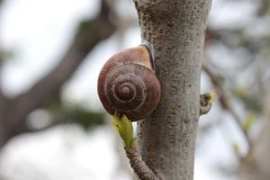 Snail Shell 3 by wuestenbrand