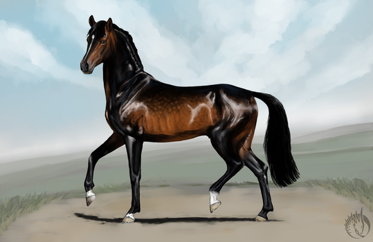 Ildon, the stallion by MargotShareaza