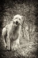 .: Wolfhound in Joy :. by Frank-Beer