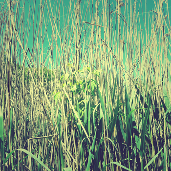 lost in reeds by SatisfiedThirst