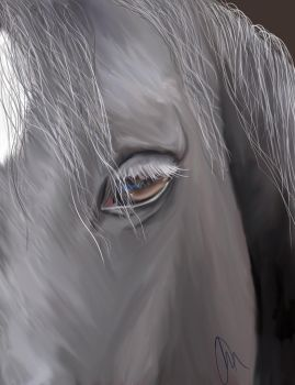 grey horse by Paintedingold