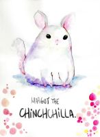 chillin chinchilla. by MiniMushroom