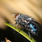 Little Creatures 084 by Frank-Beer