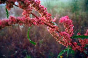 flower with webs and dew by FigoTheCat