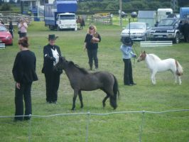 All Breeds Show 68 by Sooty-Bunnie