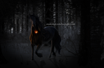 THE LIGHTS WILL TAKE ME HOME by euphoriaxo