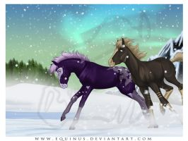 Dashing to Christmas by Equinus