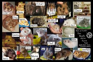 Seven Years Of Hamsters by Myrret