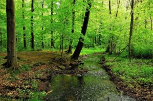 A brook in the spring forest by jchanders