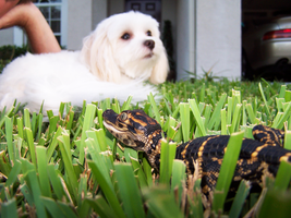 Rudy and Nemo Laying in Grass by ADDanny