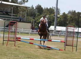 STOCK Showjumping 387 by aussiegal7
