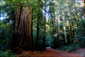 Redwoods Of Fall by LePhotagDeAbnormal