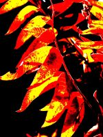 Fall Fire by mistersunshine20