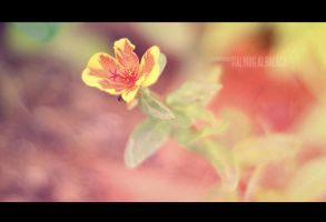 Rainbow blossom by enemia