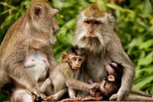 Macaca Moms and Sons by frankylie
