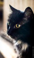 Yellow eyes by Teaminds