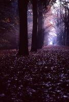 Scary Forest by Obscurity-Doll