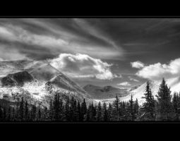 breck bw by mwill8886