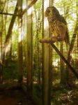 Caged Owl by kaceymears