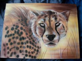 Cheetah stare by Mathius88