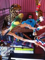 my new parakeet by Weird-Honey