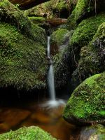 Wainui River Tributary. by LiquidityImages