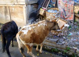 Homeless Cows by BioHazardSystem