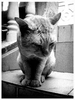 Grumpy Old Cat by Mr-Ripley