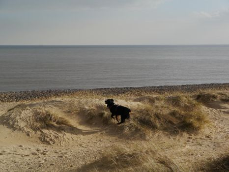 Juno on the dunes! by Link24656
