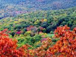 Autumn in Connecticut by RealityIntolerant