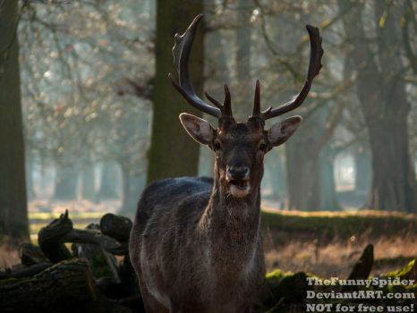Young Stag being curious by TheFunnySpider