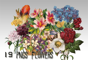 19 png flowers by sodust