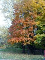 Fall in Sofia 4 by tonev