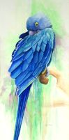 Hyacinth Macaw by KathleenCasey