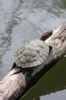 00306 - Muddy Turtle Shell I by emstock