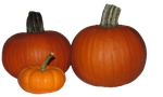 Pumpkins tube by WDWParksGal-Stock