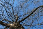 Winter Tree without snow by UrsusVanDraco