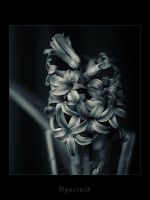 Hyacinth III by Athines