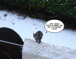 Cat in the Snow by johnfsfreeman