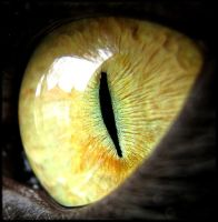 Cats eye by CroEva