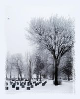 Fog and Frost IV by Handie