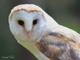 barn owl by xAkuReix