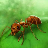 Ant by Cacodaemonia by 100ThemesChallenge