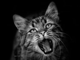 Roar time! by ZoranPhoto